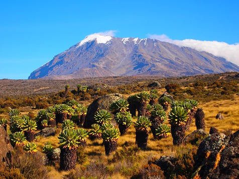 Kilimanjaro_3rd_2.jpg