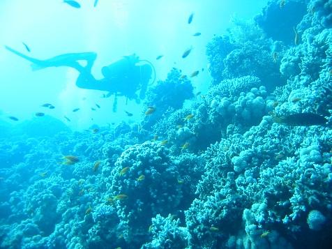 サンゴ礁.jpg