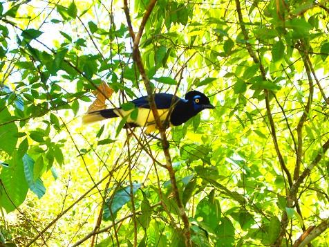 イグアスで出会った鳥.jpg