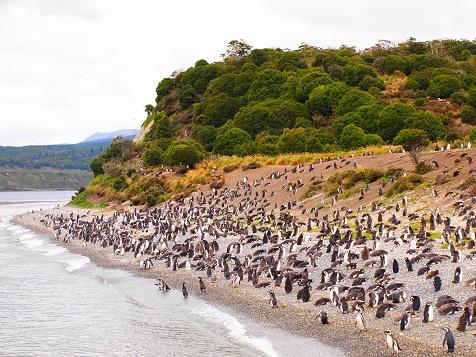 ペンギン島.jpg