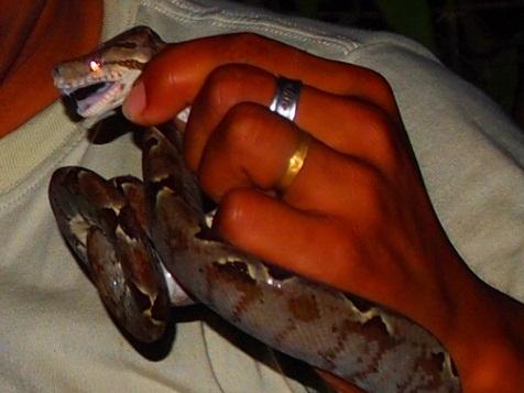毒蛇アップ.jpg